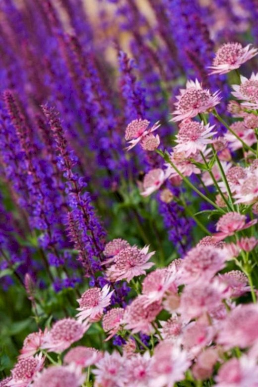 Inspiring Planting Combination Ideas For Your Garden 47