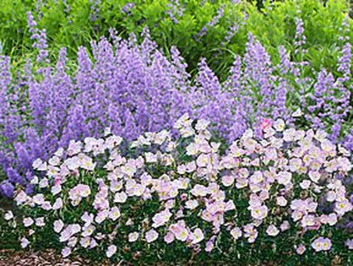Inspiring Planting Combination Ideas For Your Garden 52