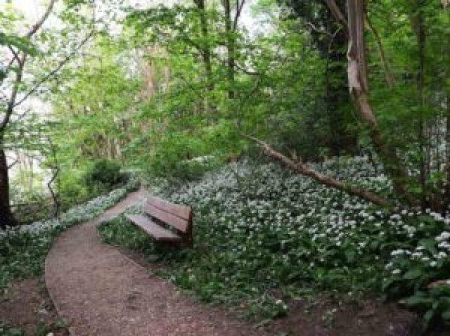 Parc Alexandra en fleur