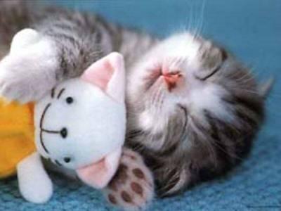 This kitten is so damn cute!