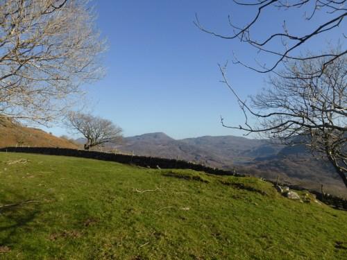 view across emerald green field