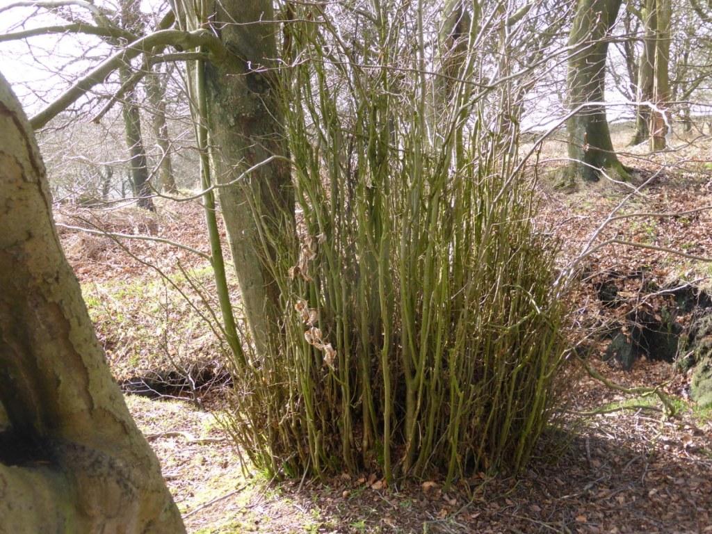 shrub thicket