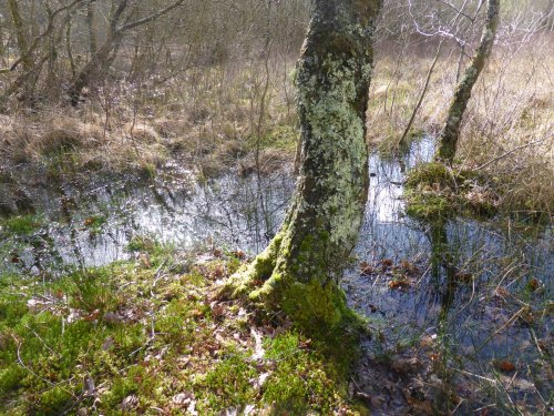tree trunk, water and dead grasses in soft side-light