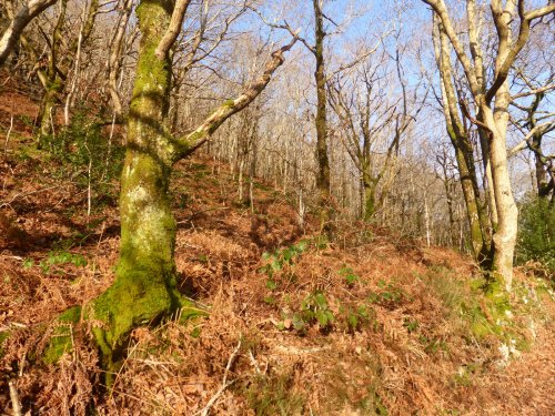 branch shadows on dry sunny hillside