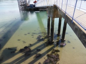 pier piles and shadows on water