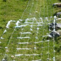 wool wrapped fencewire