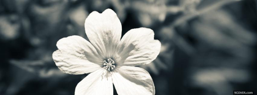 White Cute Flower Photo Facebook Cover