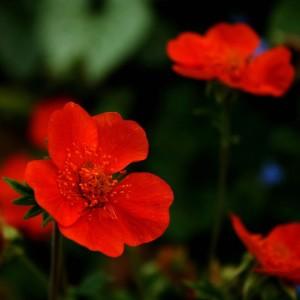 Какие цветы в саду любят тень: выращивание своими руками ...