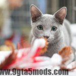Training Your Cat? How to Keep Him Motivated