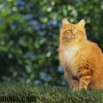 Cat Facts: Why Orange Cats Are Usually Male