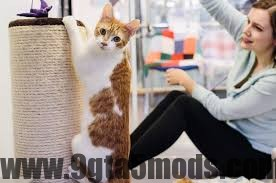 How Do I Stop My Cat From Spraying in the House?