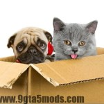 Moving Long Distance with Your Pets