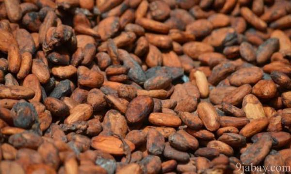 cocoa export from nigeria 9jabay.com