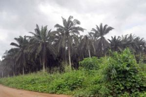 Uzodinma Signs Law Stopping Vandalisation Of Oil Palm Trees In Imo