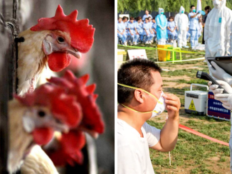 China records world's first case of human infection with H10N3 bird flu