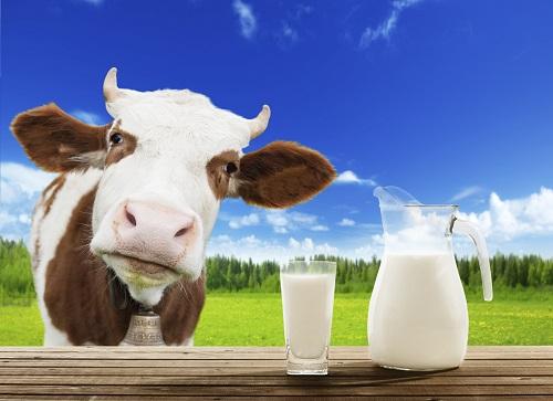 Dark Effects Of Taking Excess Milk
