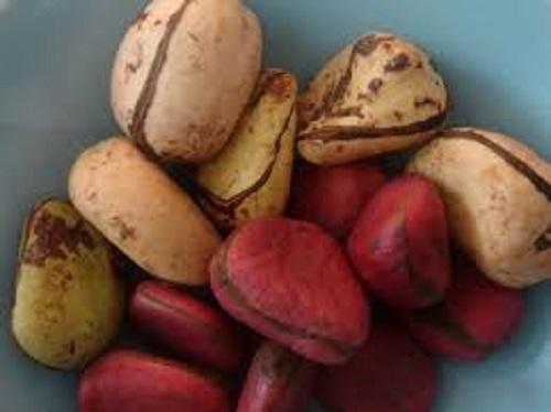 importance-kola-nut
