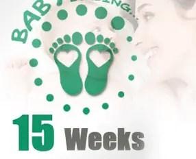 تكون الجنين في الأسبوع الخامس عشر من الحمل