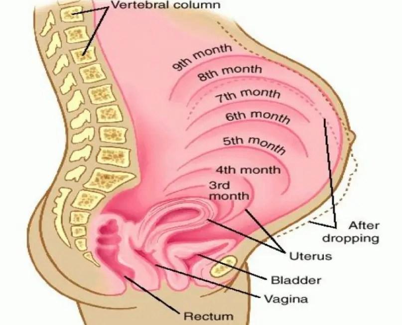 البواسير أثناء الحمل