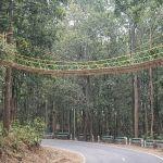 India builds bridge to help reptiles cross road