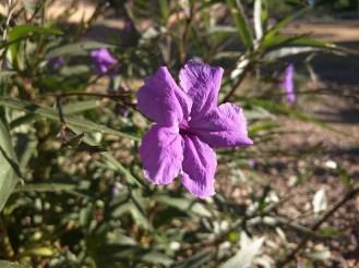 nex-flower-2