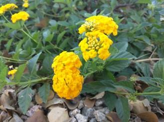 nex-yellow