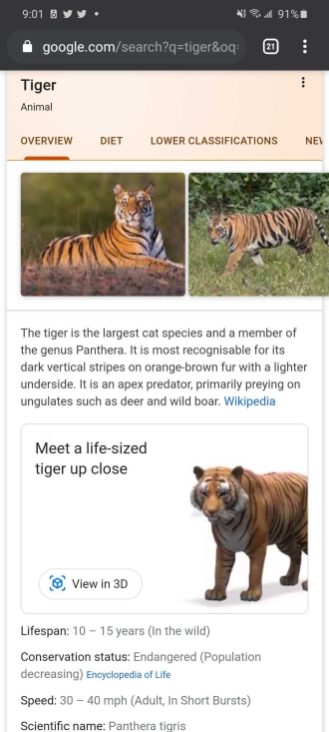 google 3d animals view in your space