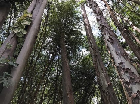 Trees without Aukey lens (up close)
