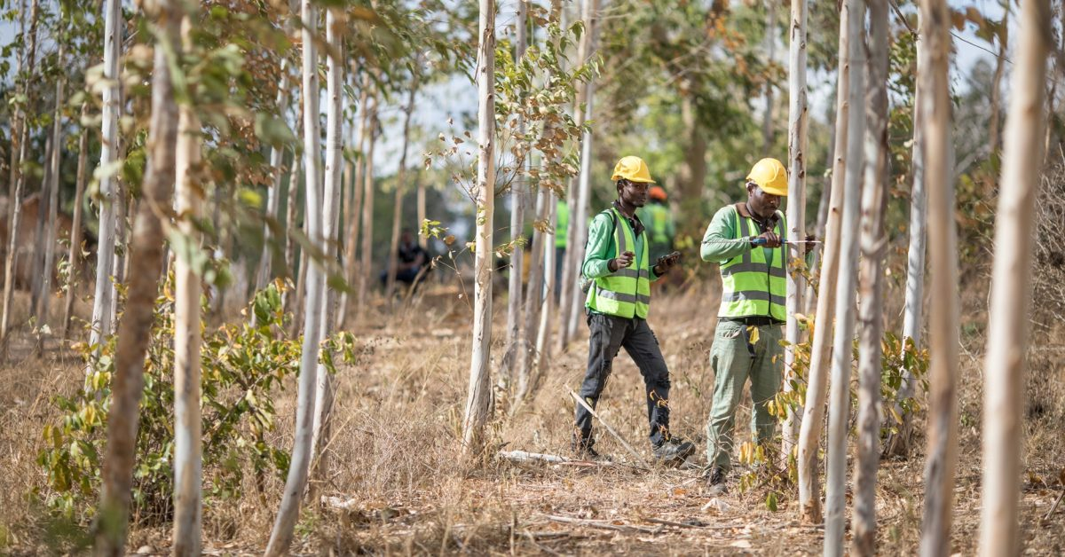 photo of Apple announces $200 million investment fund for forest restoration projects image