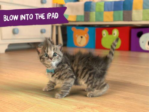 Little Kitten- My Favorite Cat-4