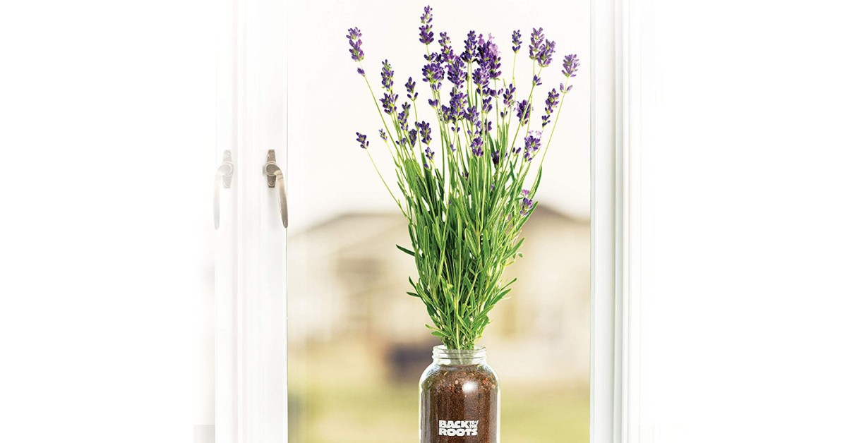 Amazon garden sale from $7: Mason jar lavender windowsill kits, wheatgrass, more up to 50% off - 9to5Toys
