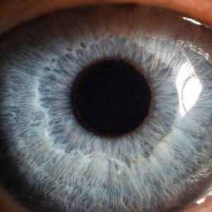 Udemy - The Ultimate Eye-Gazing Meditation Workshop