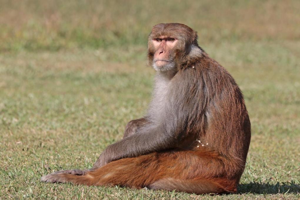 monkey- 9WSO Download