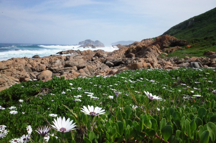Robburg Nature Reserve, Garden Route, South Africa