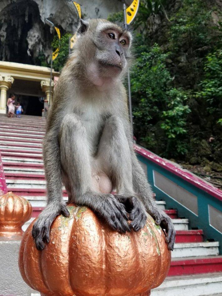 Comfy monkey