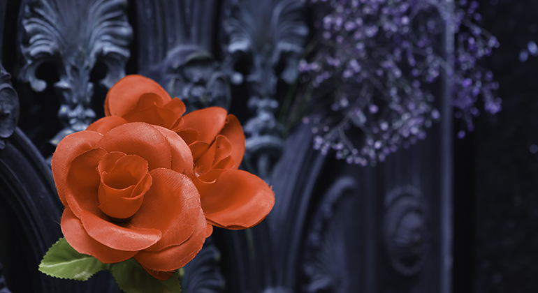 Rose, Recoleta Cemetery, Buenos Aires © Michael Raymond 2016