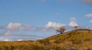 Trees on a Hill in Hawaii ~ © Michael Raymond