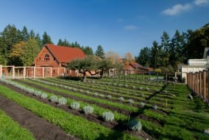 The fresh produce cutting gardens at Heyday Farm.