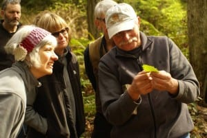 An expert showing nettle to explorers at Islandwood