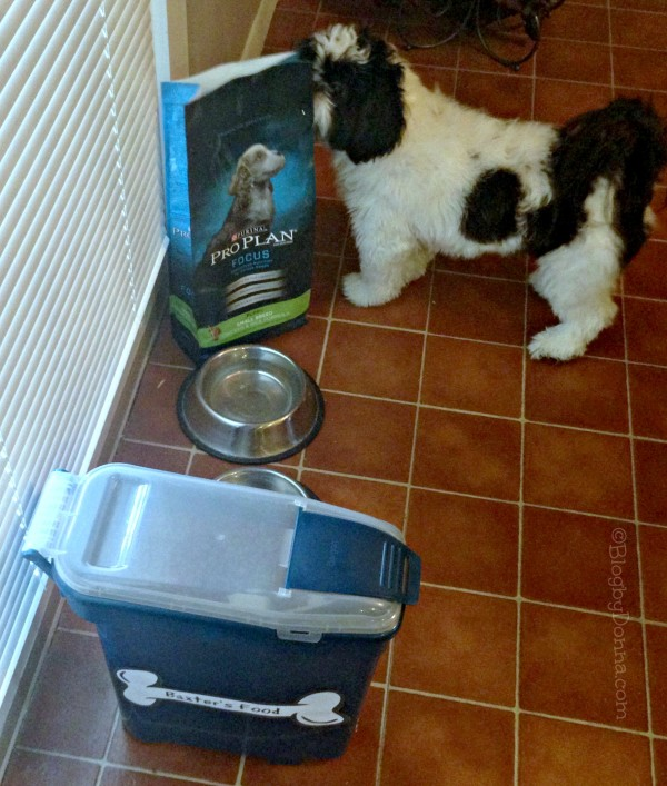 Baxter loves Purina Pro Plan #ProPlanPet