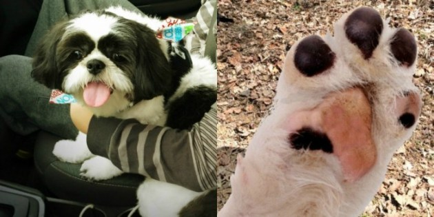 Ways to keep your dog safe this summer - grooming and clipping your dog's nails.