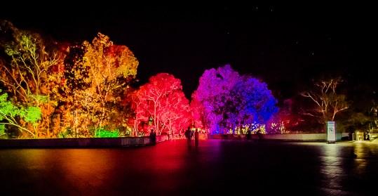 lights (31 of 37)