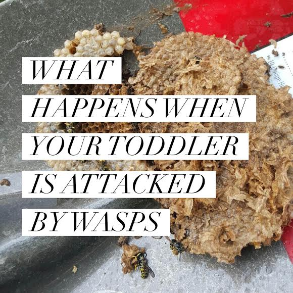 What Happens When Your Toddler is Attacked by Wasps