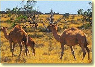Camel West