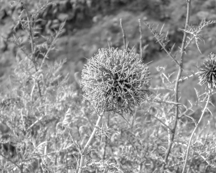 Flower on the way to Devora Waterfall - No. 2