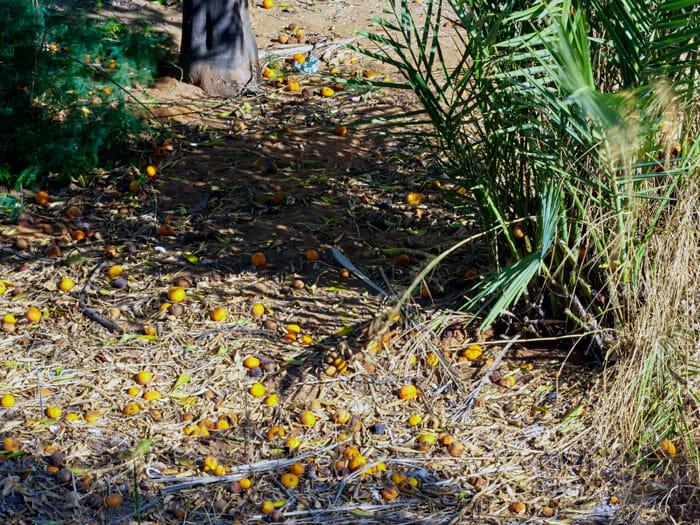Oranges in Tel Aviv