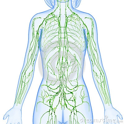 DIY Lymphatic Methods to Boost Immunity & Detox