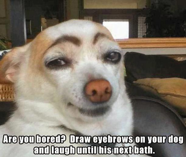 Dog Brows