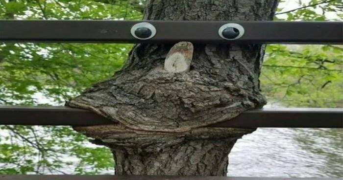 Funny Tree Googly Eyes image