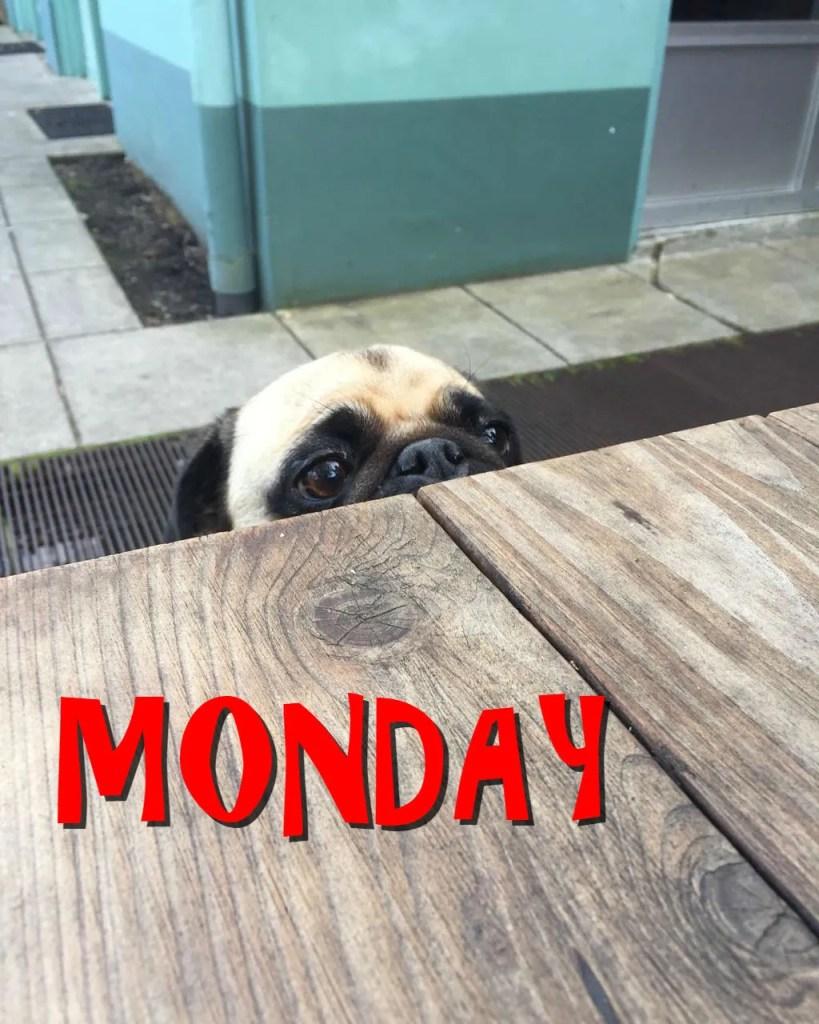 Monday Dog Image